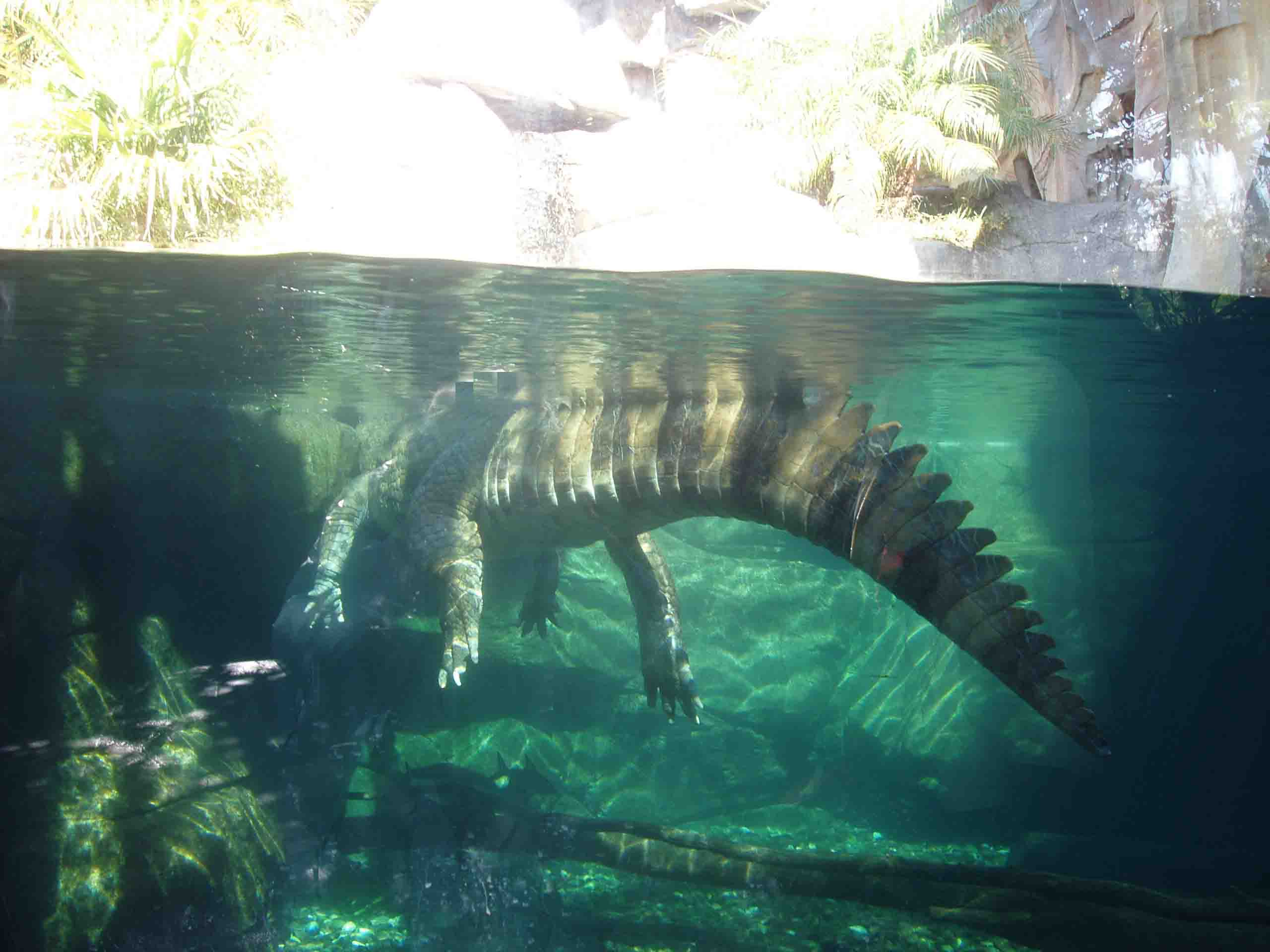 krokodil%20onder.jpg